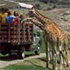 San Diego Zoo Safari Park attraction information
