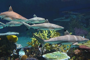 National Aquarium - Blacktip Reef Shark Package package information