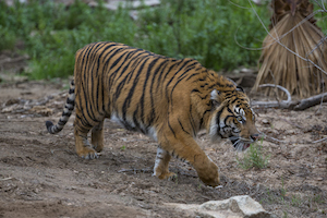 Animals of the Wild! - San Diego Zoo Safari Park Package