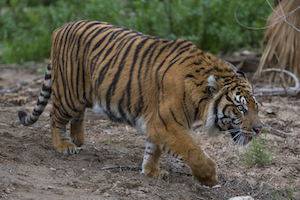 Animals of the Wild - San Diego Zoo/Safari Park Package