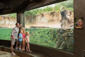 San Antonio Zoo Package