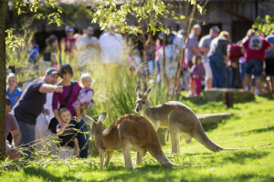 Nashville Zoo Family Fun Package