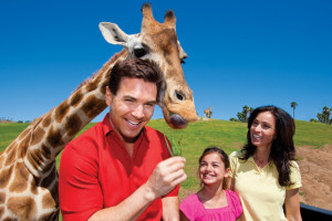 An Adventurer's Paradise at the San Diego Zoo Safari Park