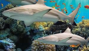 Baltimore Aquarium Ultimate VIP Package-Pier 5 Hotel