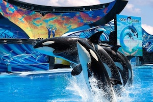 Have a WHALE of a time at SeaWorld Adventure Park Orlando