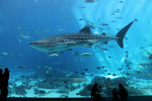 Georgia Aquarium Imagination Nights (Discount PM Admission) - Skip The Box Office Line - Save 30% + Hotel Package