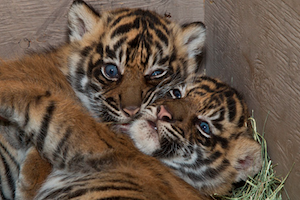 Go Wild at the San Diego Zoo Safari Park - Holiday Inn Express and Suites Carlsbad Beach
