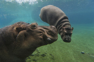 San Diego Zoo - Buy Discount Tickets, Tours, and Vacation