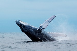 A Whale of an Adventure Package with Newport Landing Sportfishing