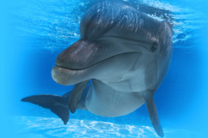 Georgia Aquarium Early Bird General Admission - Skip The Box Office Line - Save 20% + Hotel Package