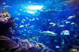 Florida Aquarium Vacation Package