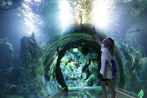 SEA LIFE Aquarium - Texas