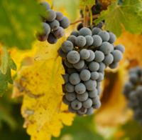 Sonoma Wine Tasting Package