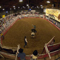 Billy Bob's Texas |  Includes admission, meal, photo-bull coupon and bull riding show